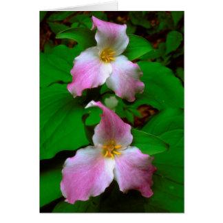 Cartes Fleur sauvage de Trillium