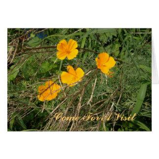 Cartes Fleur sauvage du moût de St John