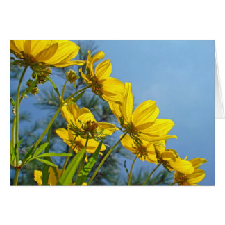 Cartes Fleur sauvage Long-Bracted de tournesol de