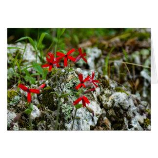Cartes Fleur sauvage rouge sur la roche
