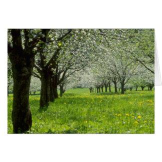 Cartes fleurs blanches de pommiers Au printemps