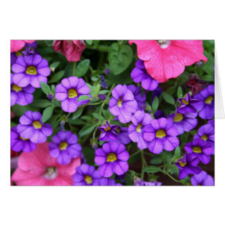 Cartes [Fleurs colorées] Calibrachoa - toute occasion
