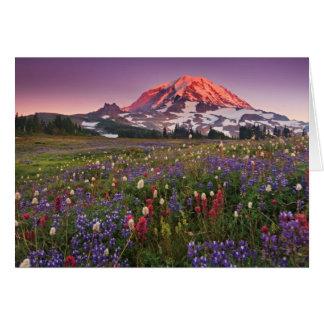 Cartes Fleurs colorées en parc national plus pluvieux