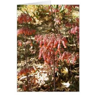 Cartes Fleurs dans Parque Tangamanga