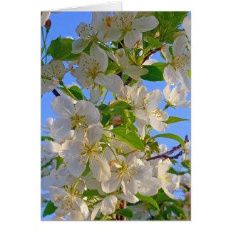 Cartes Fleurs d'Apple