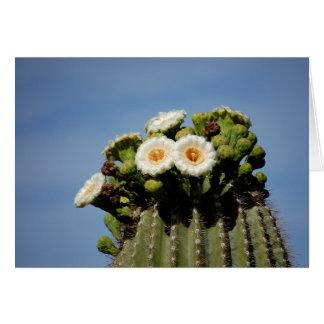 Cartes Fleurs de cactus de Saguaro