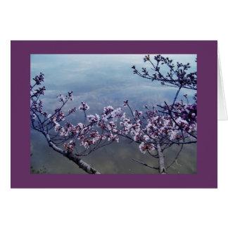 Cartes Fleurs de cerisier au bassin de marée, Washington