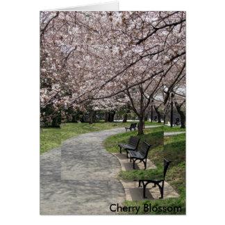 Cartes fleurs de cerisier de DC de Washington