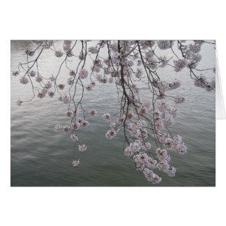 Cartes fleurs de cerisier sans la foule