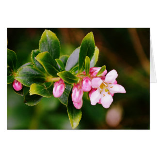 Cartes Fleurs de cerisier sauvages