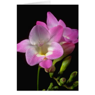 Cartes Fleurs de freesia de ressort