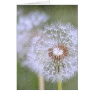 Cartes Fleurs de pissenlit