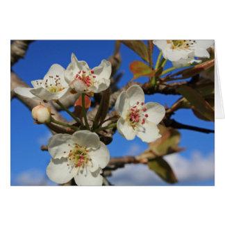 Cartes Fleurs de poire