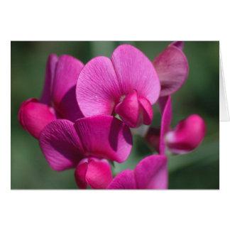 Cartes Fleurs de pois