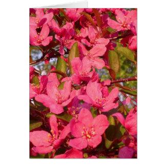Cartes Fleurs de pomme sauvage