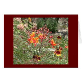 Cartes Fleurs de sud-ouest de désert