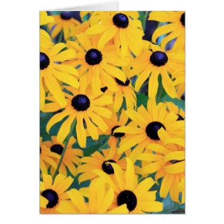 Cartes Fleurs de Susan observées par noir dans