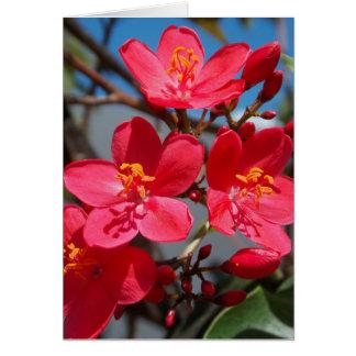 Cartes Fleurs d'été dans Figi