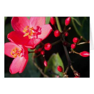 Cartes Fleurs d'été dans Figi II
