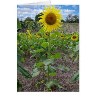 Cartes Fleurs du Kansas