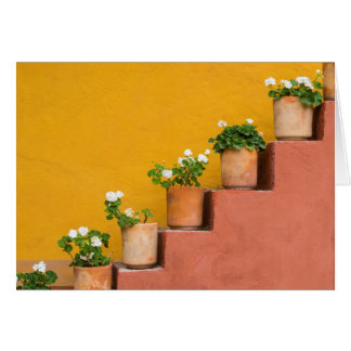 Cartes Fleurs mises en pot sur l'escalier