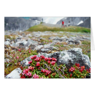 Cartes Fleurs parmi des roches