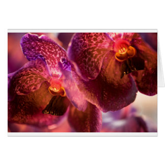 Cartes Fleurs pures de cire de Vanda d'orchidée