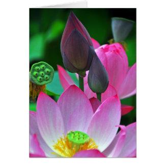 Cartes Fleurs roses de Lotus