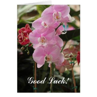 Cartes Fleurs roses d'orchidée
