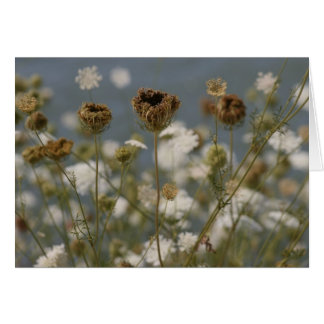 Cartes Fleurs sauvages