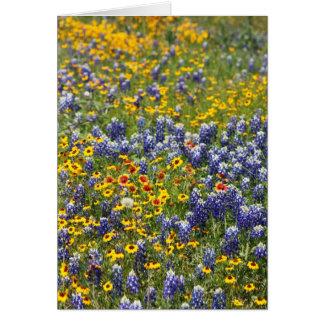 Cartes Fleurs sauvages du Texas par Cynthia Wenslow
