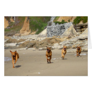 Cartes Fonctionnement de Rhodesian Ridgebacks