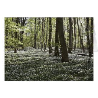 Cartes Forêt dans le printemps 2