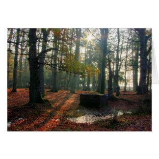 Cartes Forêt d'automne