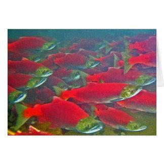 Cartes Frai de saumon de saumon rouge couru