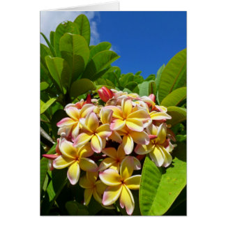 Cartes Frangipani hawaïen