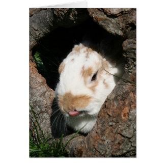 Cartes Fumisterie de lapin