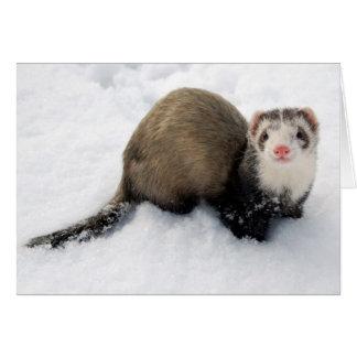 Cartes Furet jouant dans la neige