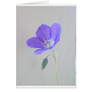 Cartes Géranium bleu