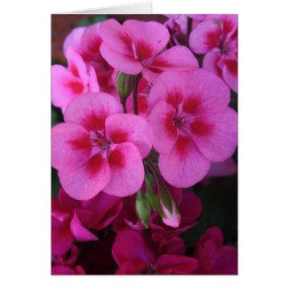 Cartes Géranium rose 2 de menthe poivrée