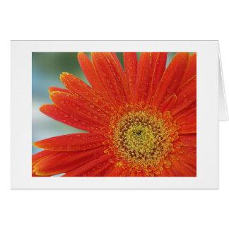 Cartes Gerbera orange