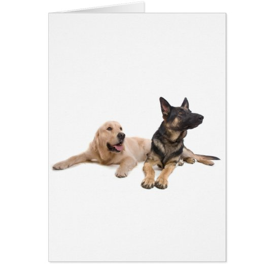 Cartes german shepherd and golden retriever
