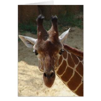 Cartes Girafe