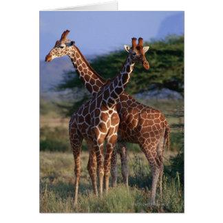 Cartes Girafe réticulée 2