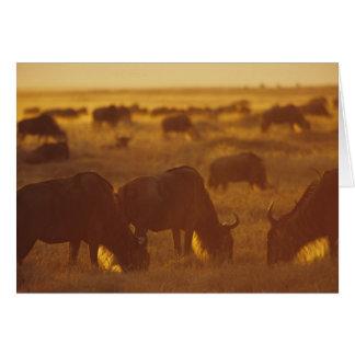 Cartes Gnou frôlant au coucher du soleil, Maasai Mara,