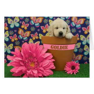 Cartes Goldie, photo de la semaine 5