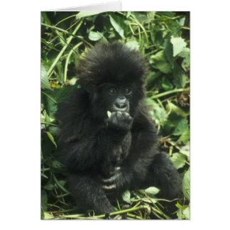 Cartes Gorille de montagne, (beringei de gorille de