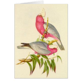 Cartes Gould - cacatoès de Rose-Breasted