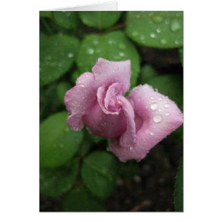 Cartes Goutte de rosée rose de Vide-Bourgeon