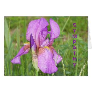 Cartes Grand bel iris, sympathie